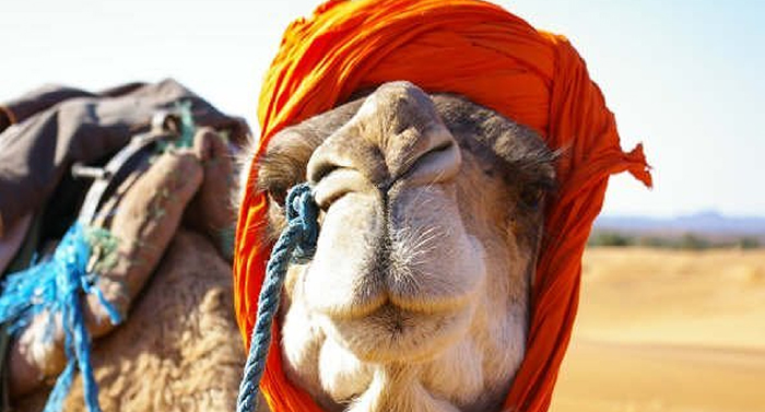cameltrek5